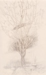 Silverpoint - Tree