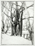 Etching - Hampstead trees