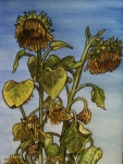 Watercolour - Sunflowers