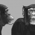 Ape design 01